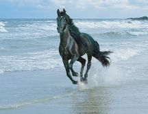 A black horse running on the beach