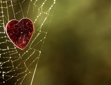 Red heart caught in spider web