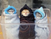 Three little funny cats - wrapped