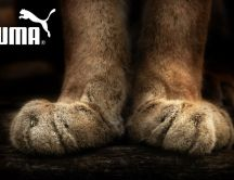 Puma brand - paws of the mountain lion