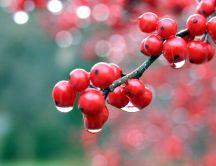 Small red fruits close up HD wallpaper