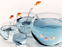Fish playing - jumping in the water 3D wallpaper