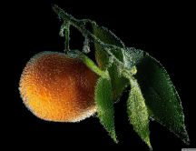 Tangerine underwater - an orange fruit full of vitamins