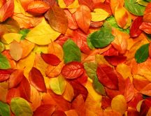 Autumn blanket - copper-colored leaves