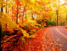 Road covered with copper-colored leaves