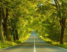Road through the trees - nature HD wallpaper