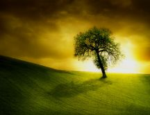 Lonely tree in sunlight on a green field
