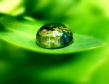 The world in a drop of water supported by a leaf