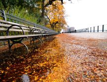 Fall on the sidewalks of New York HD wallpaper
