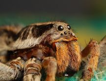 Macro photo - spider eyes close up HD wallpaper