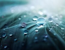 Macro photo - drops of water close up HD wallpaper