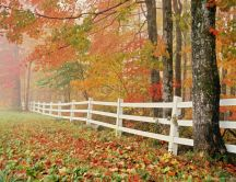 White fence at the end of the forest HD wallpaper