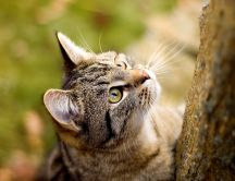 Curious cat wants to climb the tree HD wallpaper