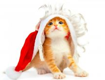 A small kitten in a Christmas cap HD wallpaper