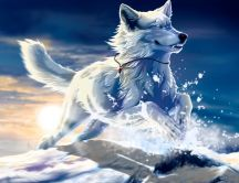 Husky - Dog Snow HD wallpaper