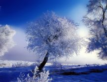 Winter time - play of colors - white and blue HD wallpaper