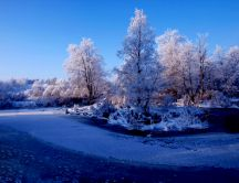 Trees dressed in white - covered with frost