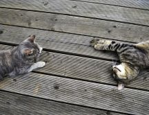 Two brindle cats on a wooden dock