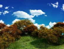 Shrubs on a meadow - beautiful landscape