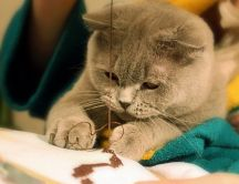 Cat learn to crochet - playful cat