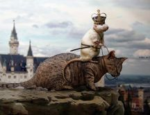 Rat - king of cats