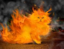 The cat is on fire - HD art design wallpaper
