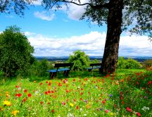 A field of colorful flowers - beautiful nature landscape