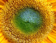Beautiful sunflower - macro HD wallpaper
