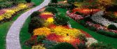 A garden of colorful flowers - Spring time