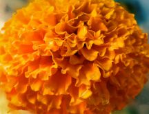 Beautiful big orange flower - macro HD wallpaper