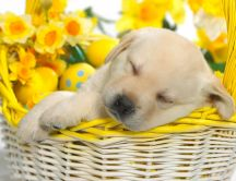 Little puppy sleeping in a basket