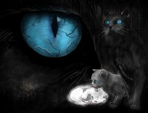 Dark eyes - cats - animal of night