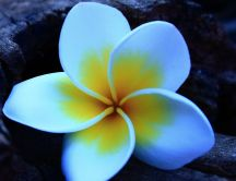 White petals with yellow spots - beautiful flower