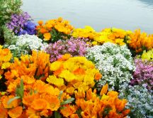 Beautiful spring garden - colorful flower