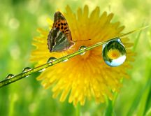 Mirror in a drop of water - fantastic HD wallpaper