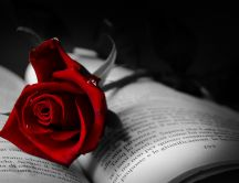 The symbol of love - red rose on a book