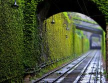 Green tunnel for trains - HD wallpaper