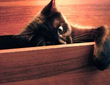 Little black spy cat HD wallpaper