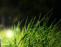 A bright light coming from the grass