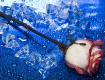 Heart of ice and a lovely rose - HD wallpaper
