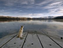 Dog - faithful friend HD wallpaper