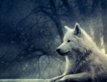 The white wolf - forest guards