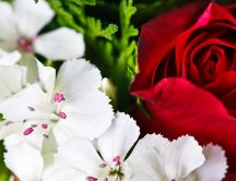 Beautiful white flowers and a red rose