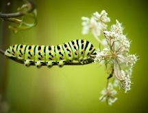 A green silkworm on a flower