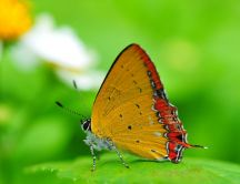 Yellow butterfly on a leaf - macro HD wallpaper
