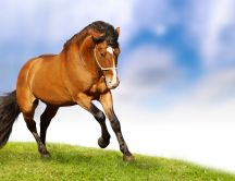 Horse romp on plain - beautiful brown animal
