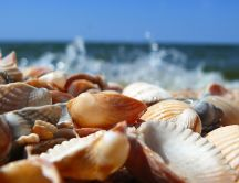 A pile of seashells - Macro HD wallpaper
