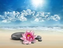 Pink lily flower and spa rocks - relaxing summer time