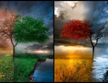 One tree four times of the year - four seasons