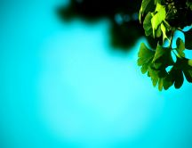Green leaf - beautiful blue summer sky